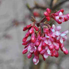 by Jana Kubínová - Flowers Tree Blossoms