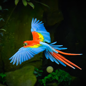 """The birds of anonymity fly high above in our shared sky. Witness their beauty.""""  ― Truth Devour by Manoj Swaminathan - Animals Birds ( parrot, birds, Bird in flight, bif,  )"""