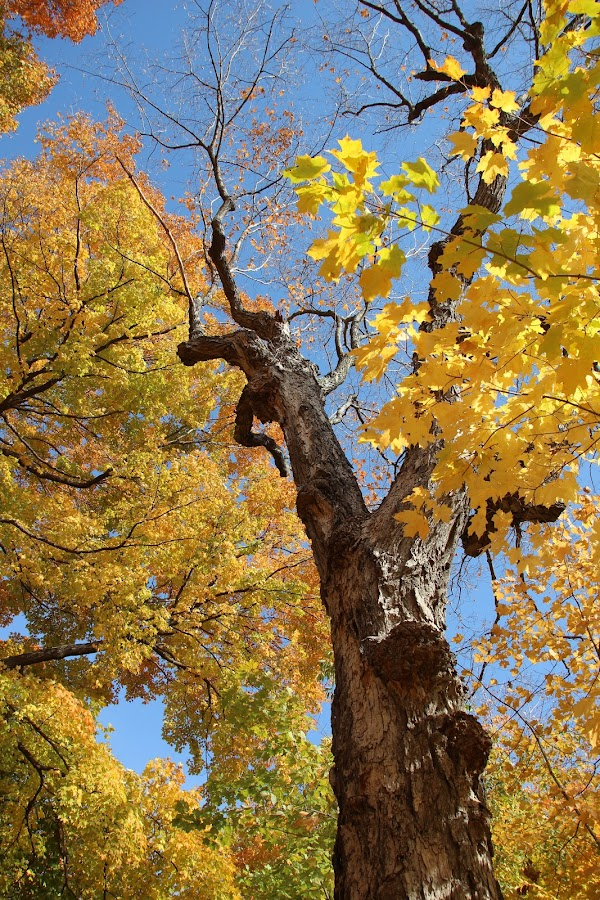 Always Look Up by Janet Brown - Nature Up Close Trees & Bushes ( pwcfallleaves-dq )