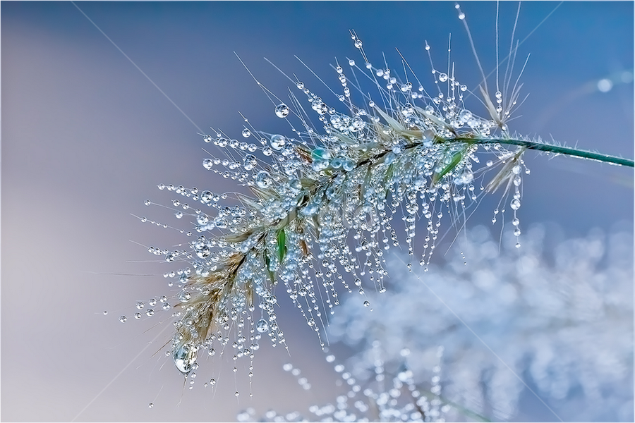 Gather Around by Randall Wilkerson - Nature Up Close Leaves & Grasses