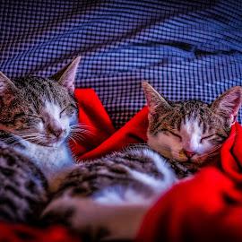 cute ittens by Bikash Kumar - Animals - Cats Kittens (  )