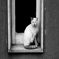Gatto di Dario Pace