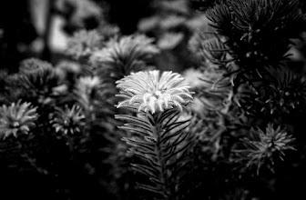 Photo: #flower  #monochrome  #blackandwhite