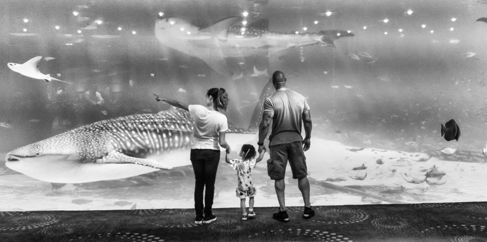 The Rock Miami Aquarium.jpg