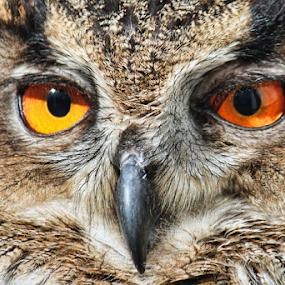 Earnley by Dean Thorpe - Animals Birds