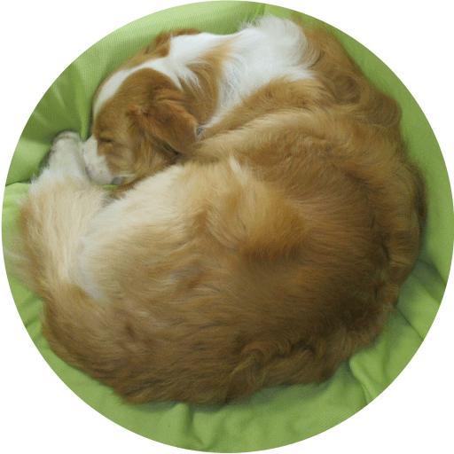 Seresu avatar image