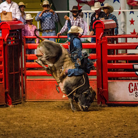 by Nico Sinselmeijer - Sports & Fitness Rodeo/Bull Riding ( cowboy, hold on, texas, rodeo, festival, entertainment, 8 seconds, bull riding )