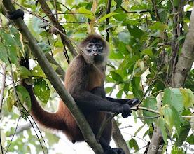 Photo: Spider Monkey @ Cabo Matapalo, Osa Peninsula