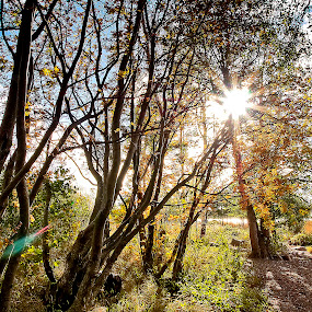 Sun Through the Trees by Hernan Sto Tomas - Nature Up Close Trees & Bushes