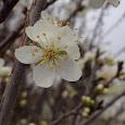 Fruit Bearing Plants of SE Idaho