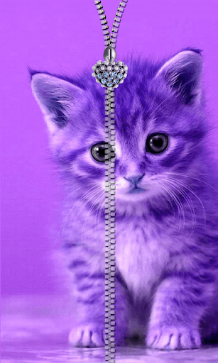 Kitty Zipper Screen Lock Free