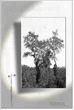 Foto: 2012 06 09 - P 164 B - über den Bäumen