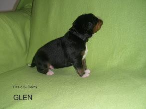 Photo: pes č.5      ČERNÝP