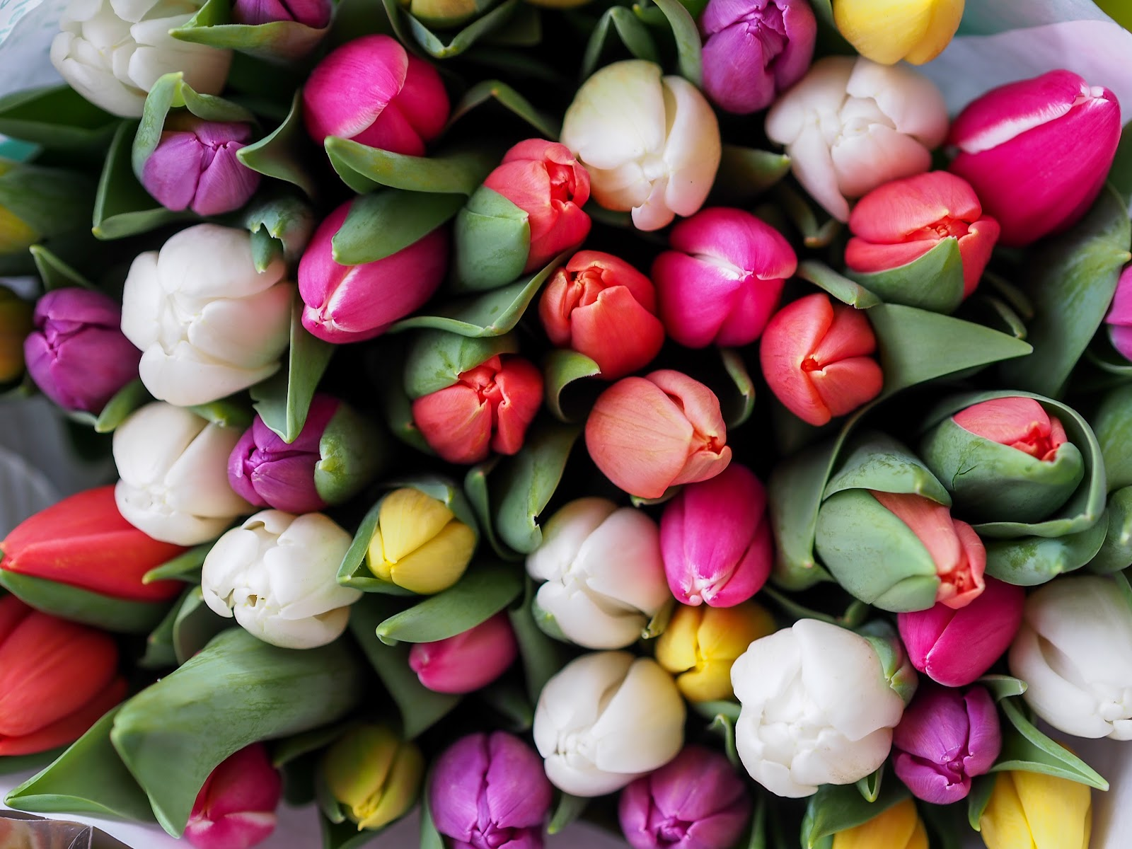 The complete guide to flower colours and meanings fresh flowers the tulip itself symbolises perfect love but like roses the meaning of a tulip is affected by the colour of its petals izmirmasajfo