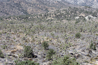 Photo: Looking toward Burns Canyon Road