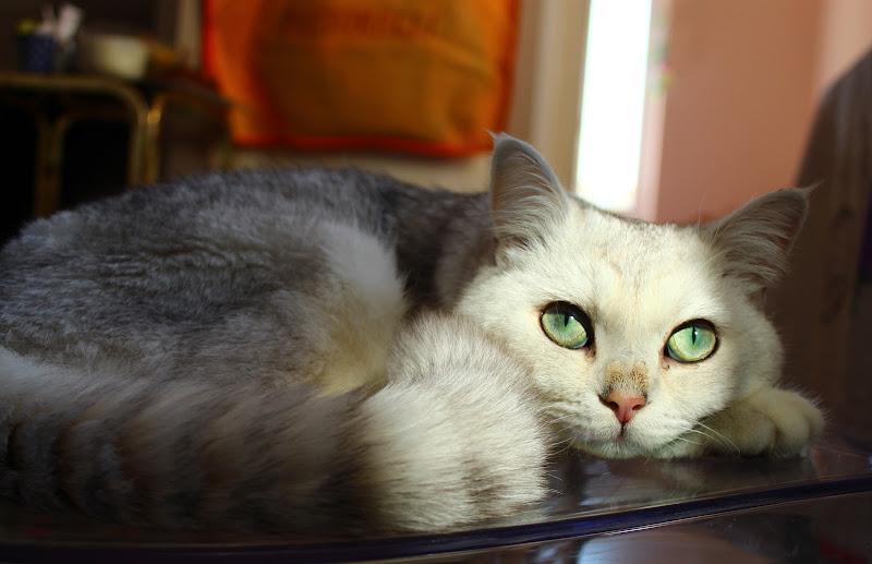 il mio gatto.... di lm27