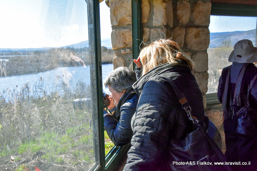 Посещение птичьего заповедника на озере Хула. Площадка наблюдения за птицами.