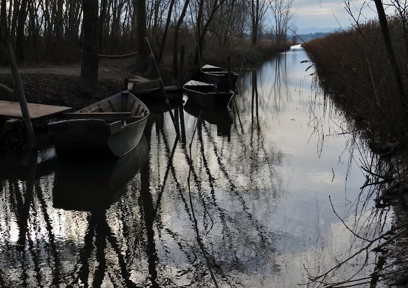 La quiete del Padule in inverno di Giorgio Lucca