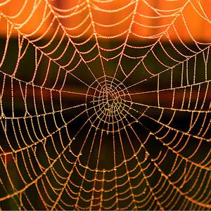 spiderweb 005_tonemapped_tonemapped.jpg