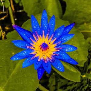 flower (1 of 1)-24.JPG