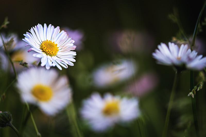 Aria di Primavera di #giannigalliphoto