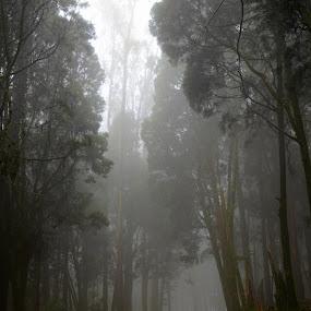 foggy street by Riju Banerjee - City,  Street & Park  Street Scenes