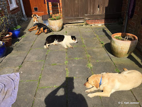 Photo: The gang is very tired after a play session with Woody Lab and Barnaby Golden - Jess Beagle, Betsy Rottie, Galu BC, Toby Lab