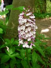 Photo: Orchidée appelée...