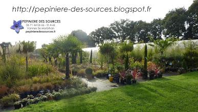 Photo: (( http://pepiniere-des-sources.blogspot.fr )) Pépinière des Sources Ventes de Végétaux - VANNES (02 97 44 62 23 - 06 71 44 06 66) St Avé-Berval-Meucon 56 Morbihan Bretagne http://www.pepinieredessources.fr http://pepiniere-des-sources.blogspot.fr (( pepinieredessources@wanadoo.fr ))