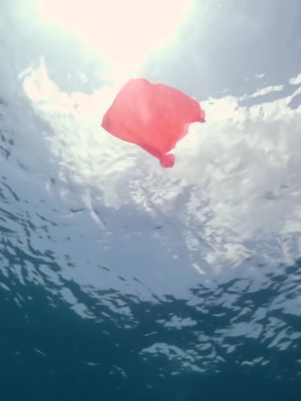 A vibrant plastic bag shown underwater from below