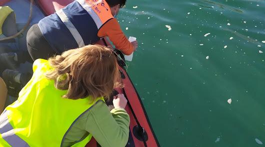 Estudios avalan el litoral de Roquetas