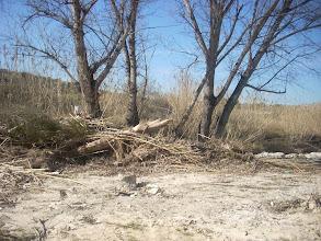 Photo: Desperfectes ben visibles en el l'arbrat del llit del Riu d'Albaida, a l'arribada a la Font del Povil.
