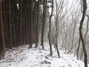 樹林帯との間を進む