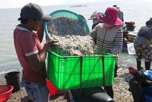 Hồ Dầu Tiếng, sớm mai ở biển Tây Ninh 2
