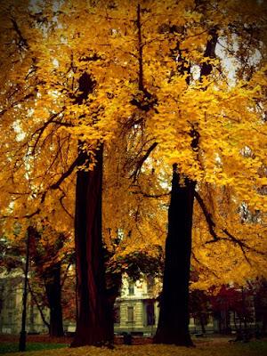 Autumn on Turin di fedellisola
