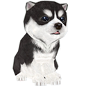 Youndoo [Cute puppy] icon
