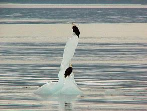 Photo: Eagles on Ice