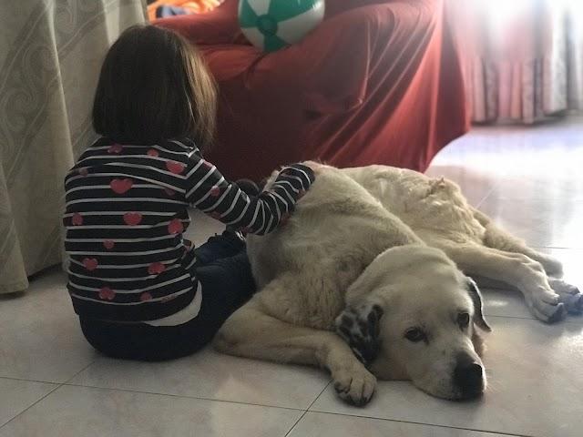Imagen de una niña con su mascota