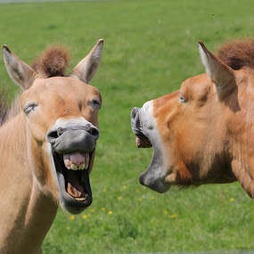 So He Said...... by Ralph Harvey - Animals Horses ( horse, wildlife, ralph harvey, marwell zoo, animal )