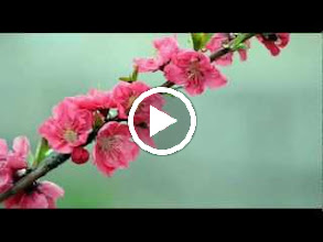 Video: A. Vivaldi  Concerto for bassoon, strings   b.c. in C major (RV 477) - Part II -
