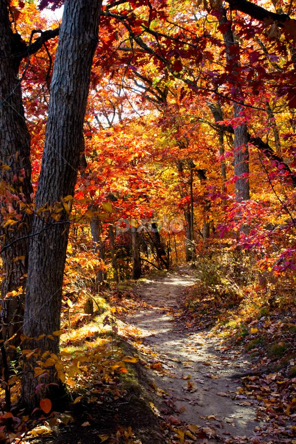 Starved Rock Park, IL by Samer Shaur - Landscapes Forests ( redtrees, pwcautumn, forest, trails, starvedrockpark, fallcolors )