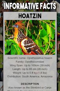 Bird Encyclopedia - náhled