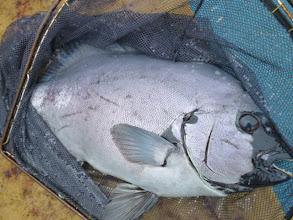 Photo: うふふ。船頭さんもイ・シ・ダ・イ。 これも2.5kgぐらいでしょう!