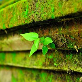 sendiri lagi by Ahmad Yahya - Nature Up Close Gardens & Produce ( nature, gardens, sendiri, close up, dulu bercahaya )