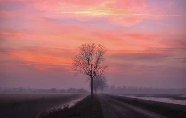 fog di alagnol