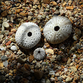 ooh by Benjamin Howen III - Nature Up Close Sand
