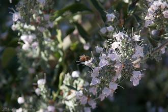 Photo: Nom Nom Nom @ McClellan Ranch Park, Cupertino, CA - http://photo.leptians.net/#Nom_Nom_Nom