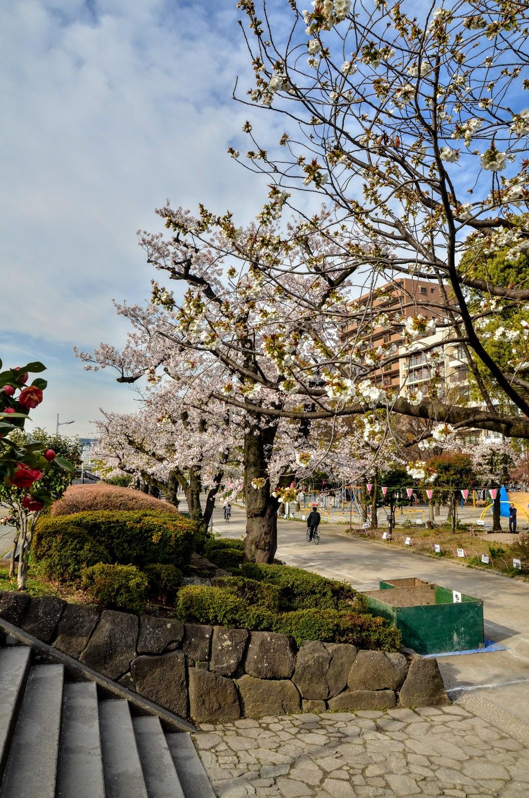 Весенний ленивый забег в погоне за сакурой с юга на север.  Сакура, солнце и немного удачи. 15 дней.  Апрель 2019.