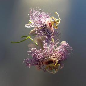 Freefall  . . . by Ilona Stefan - Flowers Flowers in the Wild ( border, delicate, two flowers,  )