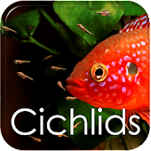 How to Breed Cichlids